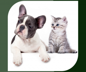 chicken liver; pet health; dogs; cats
