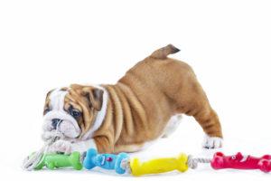 puppy, dog, toy