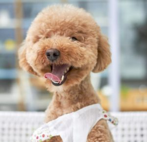 dog groomer, grooming, tips, pet care, pets, dogs